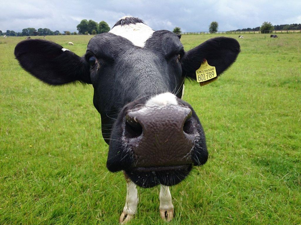 De verdad eres intolerante a la lactosa?
